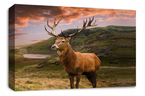 Scottish Highland Stag Wall Art Picture Teal Black Grey White Animal Deer Canvas Print 30 x 20!